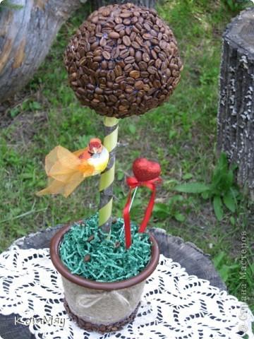 Новое кофейное деревце на День рождения тёти мужа - большой любительнице кофе и птиц. Высота деревца - 45 см, диаметр кофейного шара - 14 см  фото 1