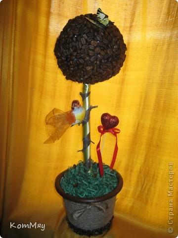 Новое кофейное деревце на День рождения тёти мужа - большой любительнице кофе и птиц. Высота деревца - 45 см, диаметр кофейного шара - 14 см  фото 3