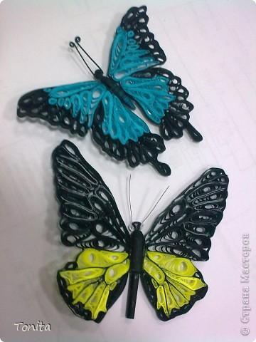 Две бабочки фото 1