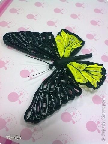 Две бабочки фото 4