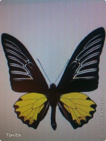 Две бабочки фото 5