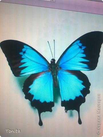 Две бабочки фото 3