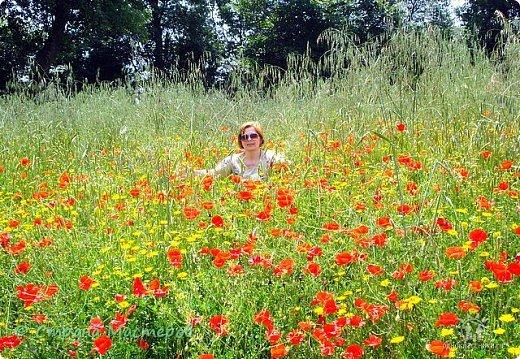 Красные маки в поле зелёном Радуют душу и сердце. Думаю, каждому это знакомо: В Рай открываются дверцы.  Маки по полю разбросаны дивно Радостный день воспевают Кто сотворил эту чудо-картину? Маки печали не знают.   фото 10