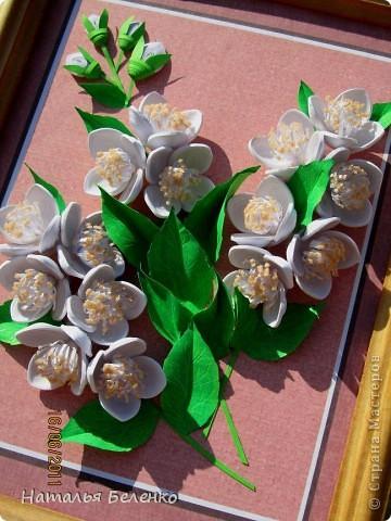 Здравствуйте, уважаемые Мастерицы!!! Сегодня у меня жасмин. Очень люблю это растение - очаровательные цветочки и изумительный запах!!! Куст жасмина растет у меня в палисаднике. фото 2
