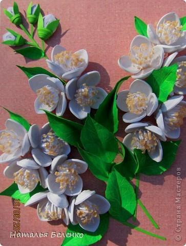 Здравствуйте, уважаемые Мастерицы!!! Сегодня у меня жасмин. Очень люблю это растение - очаровательные цветочки и изумительный запах!!! Куст жасмина растет у меня в палисаднике. фото 3