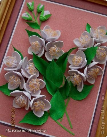 Здравствуйте, уважаемые Мастерицы!!! Сегодня у меня жасмин. Очень люблю это растение - очаровательные цветочки и изумительный запах!!! Куст жасмина растет у меня в палисаднике. фото 8