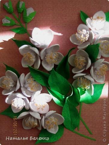 Здравствуйте, уважаемые Мастерицы!!! Сегодня у меня жасмин. Очень люблю это растение - очаровательные цветочки и изумительный запах!!! Куст жасмина растет у меня в палисаднике. фото 10