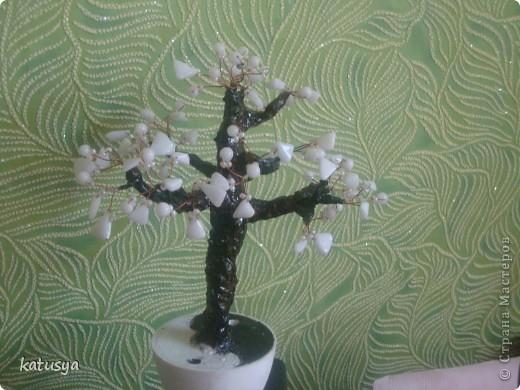 Первое корявое дерево,,но как к первому ребенку отношусь к нему с нежностью.с него всё началось... фото 3