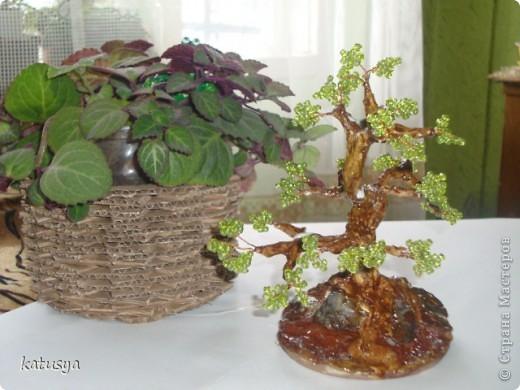 Первое корявое дерево,,но как к первому ребенку отношусь к нему с нежностью.с него всё началось... фото 2