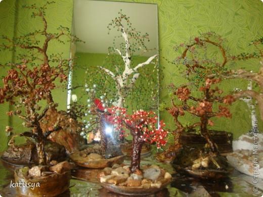 Первое корявое дерево,,но как к первому ребенку отношусь к нему с нежностью.с него всё началось... фото 8