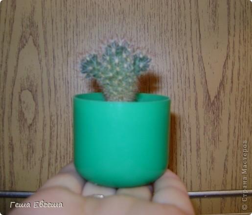 """Купила маленький кактус и решила сделать ему красивый """"домик"""". фото 2"""
