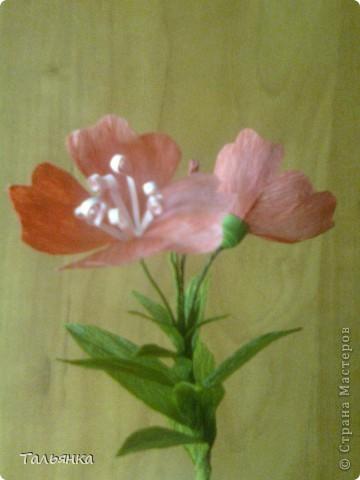 """Эти цветы - часть моей будущей композиции, скоро выложу, а пока... Оцените, пожалуйста. Дорогие мастерицы, может кто-то знает название этих цветов (а может непохоже?), делала, так сказать, с """"натуры"""". фото 3"""