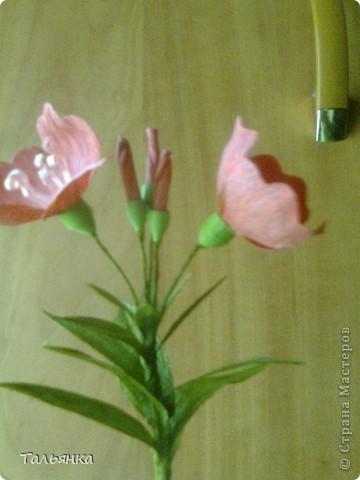 """Эти цветы - часть моей будущей композиции, скоро выложу, а пока... Оцените, пожалуйста. Дорогие мастерицы, может кто-то знает название этих цветов (а может непохоже?), делала, так сказать, с """"натуры"""". фото 5"""