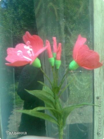 """Эти цветы - часть моей будущей композиции, скоро выложу, а пока... Оцените, пожалуйста. Дорогие мастерицы, может кто-то знает название этих цветов (а может непохоже?), делала, так сказать, с """"натуры"""". фото 4"""