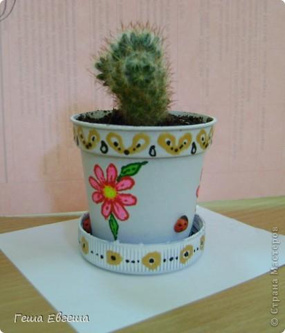 """Купила маленький кактус и решила сделать ему красивый """"домик"""". фото 1"""