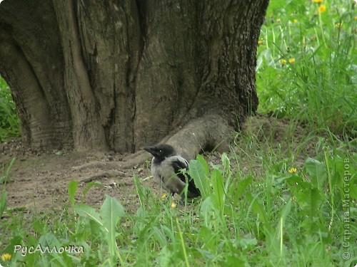 Недалеко от нашего дома есть парк, в котором мы часто гуляем. И вот в этом парке при желании можно увидеть много чего интересного.  В одной раскидистой яблоне есть небольшое дупло, а в этом дупле... фото 46