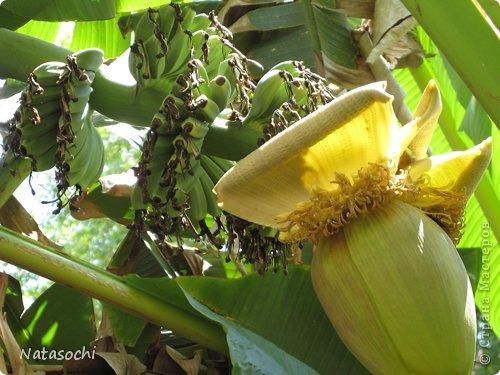 """Добрый день! Купила недавно новую бумажку. Интересная по фактуре, рельефная, шершавая, с небольшим золотым рисунком. Но самое главное - очень """"кусудамная"""". Автор: Maria Sinayskaya, Модель: Lotus crown   фото 7"""