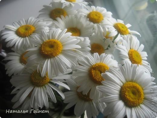 Добрый день моим гостям! Посмотрите, как цветет!!!Нафотографировала, не удержалась!Просто красиво! Это ахименес.Как распушился!Просто торжествует. фото 19