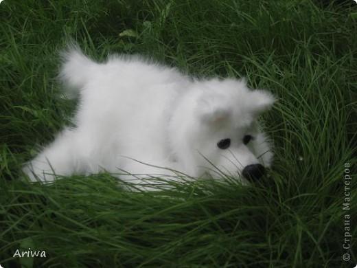 На днях появился еще один пес. Очень похож на белого медведя.  фото 3