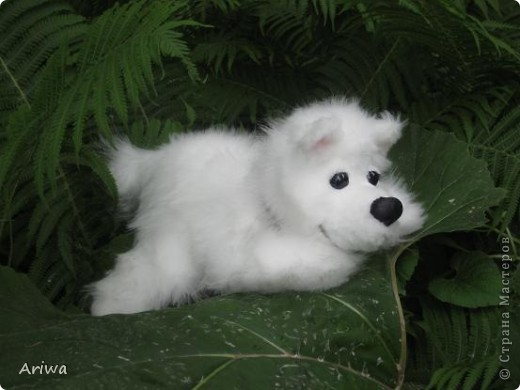 На днях появился еще один пес. Очень похож на белого медведя.  фото 4