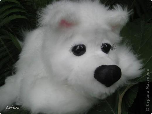 На днях появился еще один пес. Очень похож на белого медведя.  фото 1