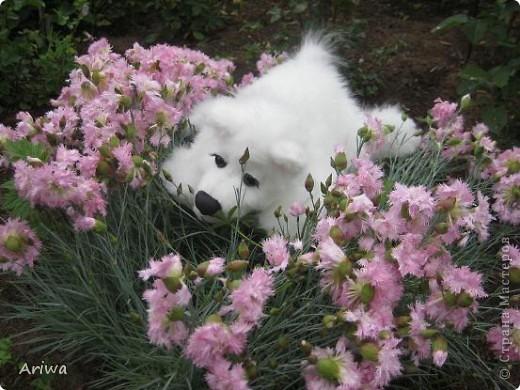 На днях появился еще один пес. Очень похож на белого медведя.  фото 5