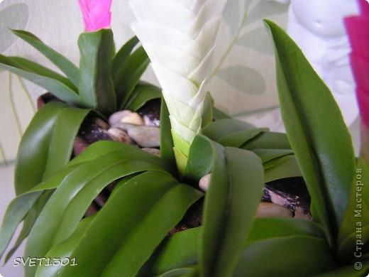 Вот такой цветочек я слепила уже давно, но всё как то не находилось времени выставить его на ваш суд. Называется он Тилландсия и показала мне его и вдохновила на лепку Оля (http://stranamasterov.ru/user/54693). Спасибо ей за это фото 5