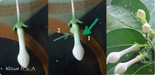 Эти беленькие цветочки, я иногда видела в свадебных букетах, но т.к. не знала названия рассмотреть их было сложновато. Потом увидела этот цветок у Сarol http://stranamasterov.ru/node/196382  (называется он оказывается  Стефанотис или мадагаскарский жасмин ) и решила слепить. фото 5