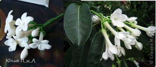 Эти беленькие цветочки, я иногда видела в свадебных букетах, но т.к. не знала названия рассмотреть их было сложновато. Потом увидела этот цветок у Сarol https://stranamasterov.ru/node/196382  (называется он оказывается  Стефанотис или мадагаскарский жасмин ) и решила слепить. фото 7