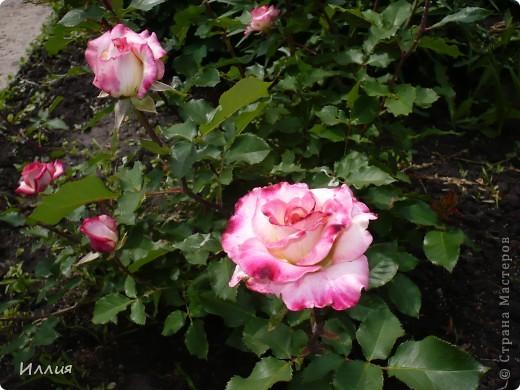 Вот такая Хозяйка сада хозяйничает теперь у нас в саду. Она очень ответственная и хозяйственная. Думаю с ее помощью и цветы будут лучше цвести и овощей будет больше, да и фрукты не пропадут. За всем она присмотрит и все проконтролирует. Вон она какя важная! фото 7