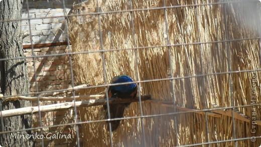 """В соседнем греческом посёлке Сартана второй год по инициативе местных предпринимателей находится замечательное место для отдыха родителей с детьми """"Деревня у Вашуры"""", или Сартанский зоопарк. Сюда мы с удовольствием приезжаем с учениками. Такие деревянные охранники встречают нас при входе. фото 15"""