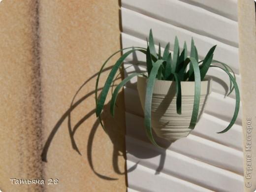 Хризантемы (КЛЕВЕР) фото 2