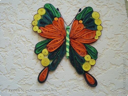 """Добрый день,  жители СТРАНЫ МАСТЕРОВ.  На сей раз - новый альбом """"БАБОЧКИ"""". Предлагаю вам два варианта фотоснимков каждой бабочки. фото 8"""