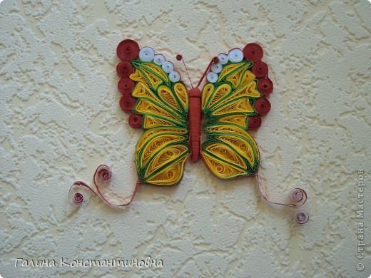 """Добрый день,  жители СТРАНЫ МАСТЕРОВ.  На сей раз - новый альбом """"БАБОЧКИ"""". Предлагаю вам два варианта фотоснимков каждой бабочки. фото 12"""