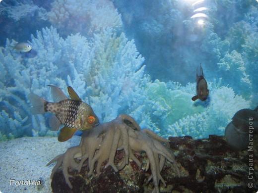 Продолжаю свой фоторепортаж о субботней поездке.   После представления в дельфинарии (http://stranamasterov.ru/node/207600) мы посетили океанариум. Он находится в том же здании. Там много разных морских и пресноводных рыб и прочей живности.  фото 15