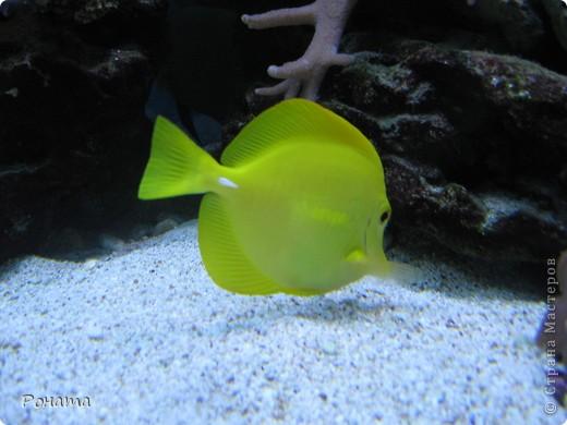 Продолжаю свой фоторепортаж о субботней поездке.   После представления в дельфинарии (http://stranamasterov.ru/node/207600) мы посетили океанариум. Он находится в том же здании. Там много разных морских и пресноводных рыб и прочей живности.  фото 17