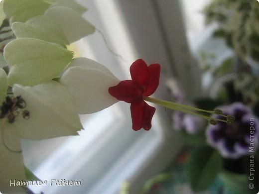Добрый день моим гостям! Посмотрите, как цветет!!!Нафотографировала, не удержалась!Просто красиво! Это ахименес.Как распушился!Просто торжествует. фото 30
