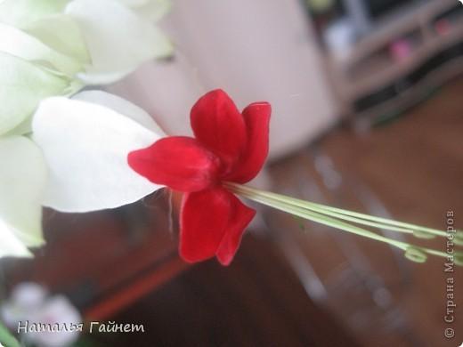 Добрый день моим гостям! Посмотрите, как цветет!!!Нафотографировала, не удержалась!Просто красиво! Это ахименес.Как распушился!Просто торжествует. фото 33