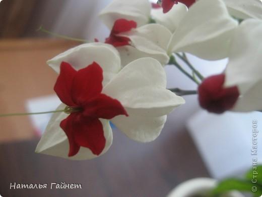 Добрый день моим гостям! Посмотрите, как цветет!!!Нафотографировала, не удержалась!Просто красиво! Это ахименес.Как распушился!Просто торжествует. фото 35