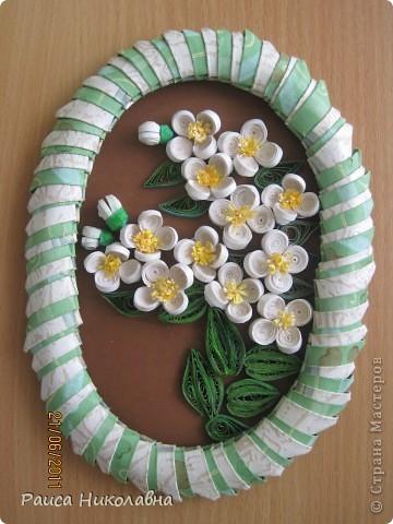 Вот и у нас цветёт жасмин. фото 1