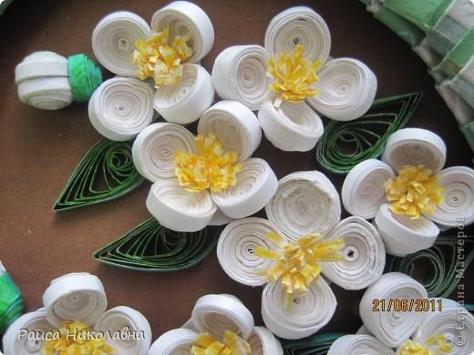 Вот и у нас цветёт жасмин. фото 2