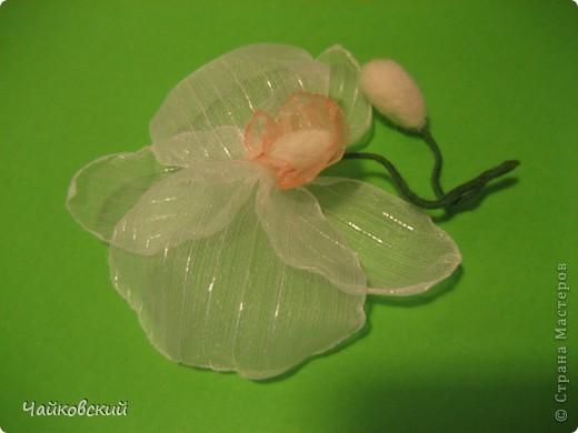 Орхидейки фото 2