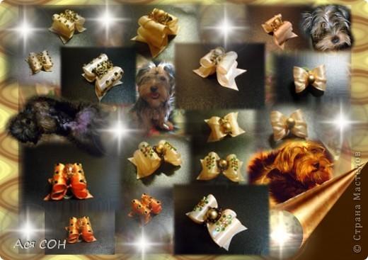 Это неполная коллекция моих собачьих бантиков (остальные уже лень фотографировать, но как-нибудь - обязательно). Выставляю оформленные скомпанованные фотки так, как они выглядят в моем домашнем альбоме, чтобы не перегружать сайт большим количеством фотографий. Это красные, малиновые и розовые бантики. №1 фото 7
