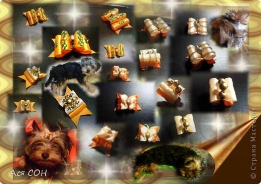 Это неполная коллекция моих собачьих бантиков (остальные уже лень фотографировать, но как-нибудь - обязательно). Выставляю оформленные скомпанованные фотки так, как они выглядят в моем домашнем альбоме, чтобы не перегружать сайт большим количеством фотографий. Это красные, малиновые и розовые бантики. №1 фото 8