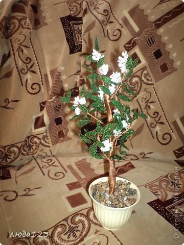 Дерево каштан  в   подарок. фото 1