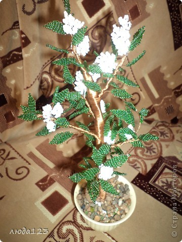 Дерево каштан  в   подарок. фото 2