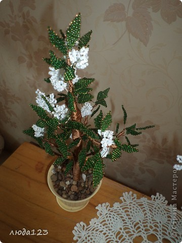 Дерево каштан  в   подарок. фото 3