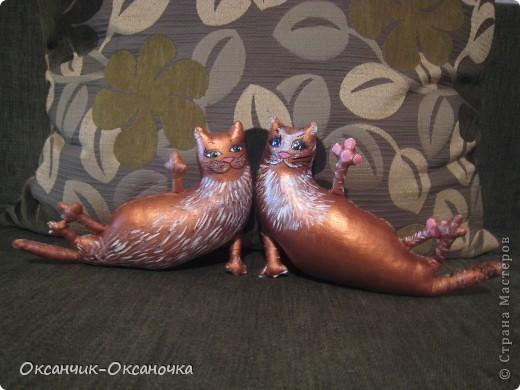 Сытые коты  фото 1