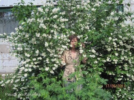 Вот и у нас цветёт жасмин. фото 6