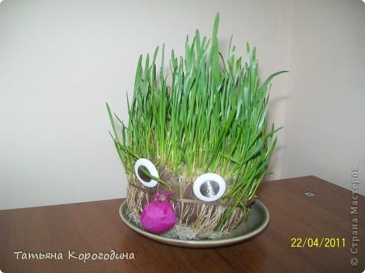 дядюшка Ау (посев семян пшеницы в чулке с опилками) фото 1